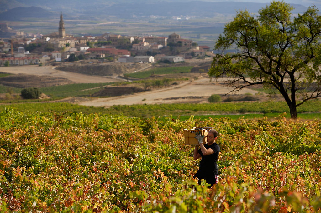 Harvest Report 2011 from Bodega Miguel Merino