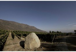 2013 Vintage Report from Vina Altair