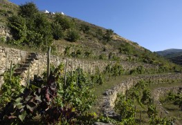 Ancestral Varietals at Dominio do Bibei