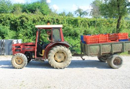 2014 Harvest Report from Marco Cecchini