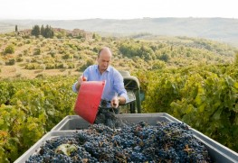 2014 Harvest Report from Rocca di Montegrossi
