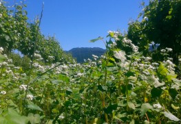 Organic Matter & Biodynamics at Huia Vineyards